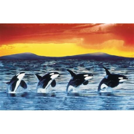 1500 LAS ORCAS